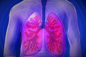 lungs 944557_960_720